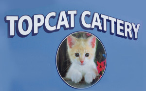 topcattery
